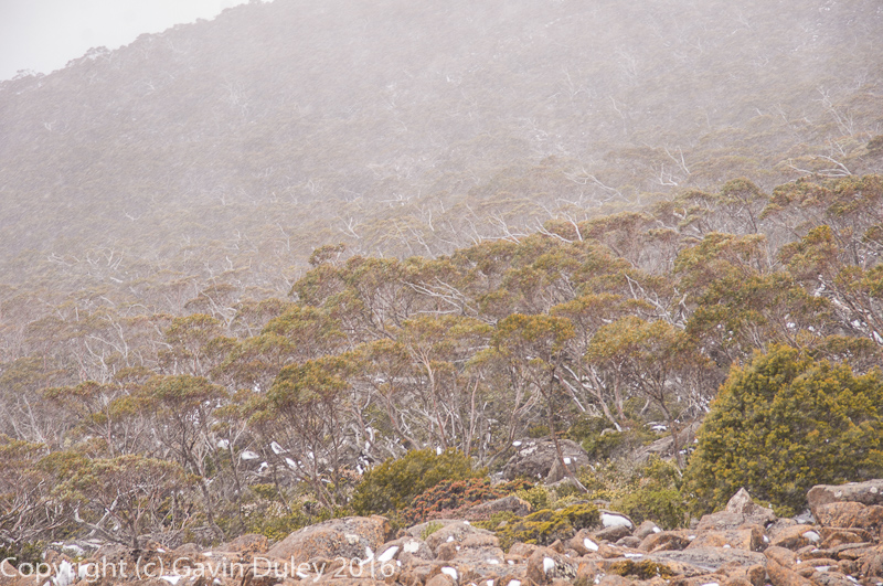 Mt Wellington, Hobart, Tasmania, Australia, 18th December 2016