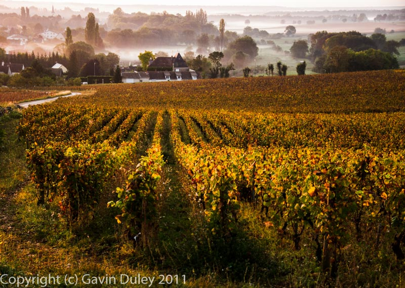 Côte d'Or morning, Burgundy, 3rd October 2011
