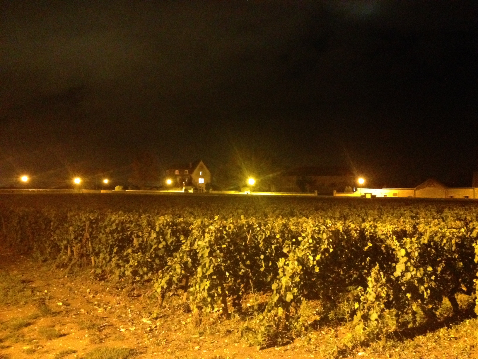 Vineyard on the edge of Meursault at Night